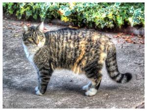 kittyoutdoors