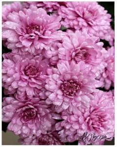 lavenderflowersprint